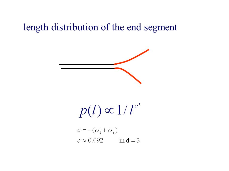 length distribution of the end segment