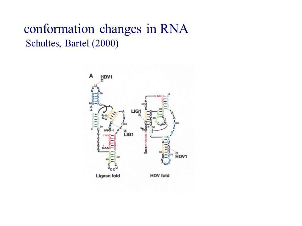 conformation changes in RNA Schultes, Bartel (2000)