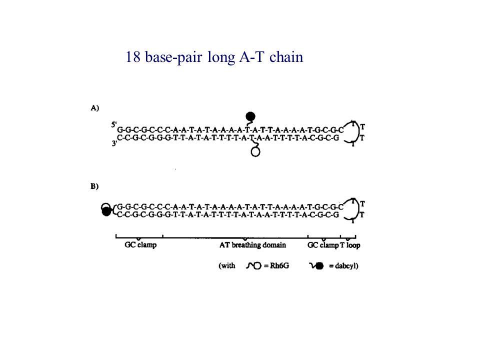 18 base-pair long A-T chain