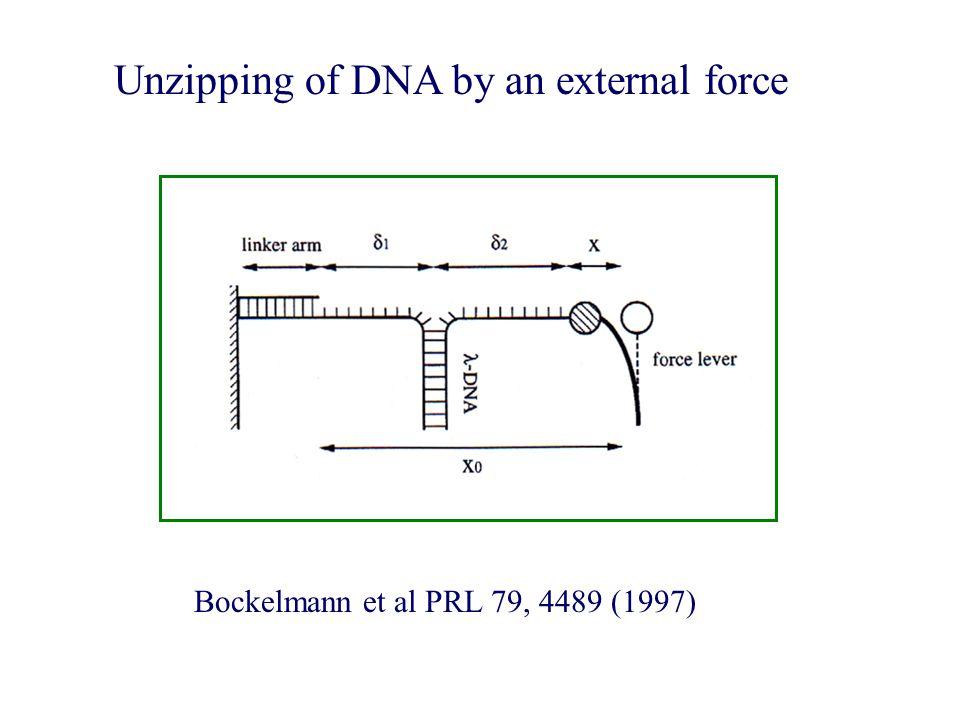 Unzipping of DNA by an external force Bockelmann et al PRL 79, 4489 (1997)