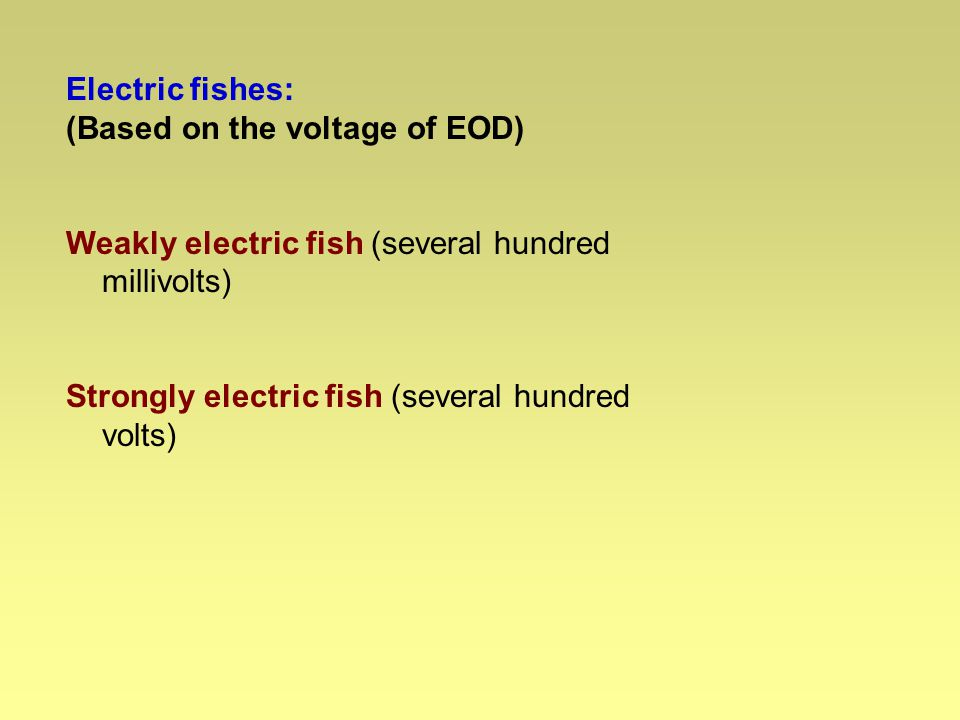 Electric fishes: (Based on the discharge pattern) Pulse type: Brief electrical pulses followed by variable intervals of silence.