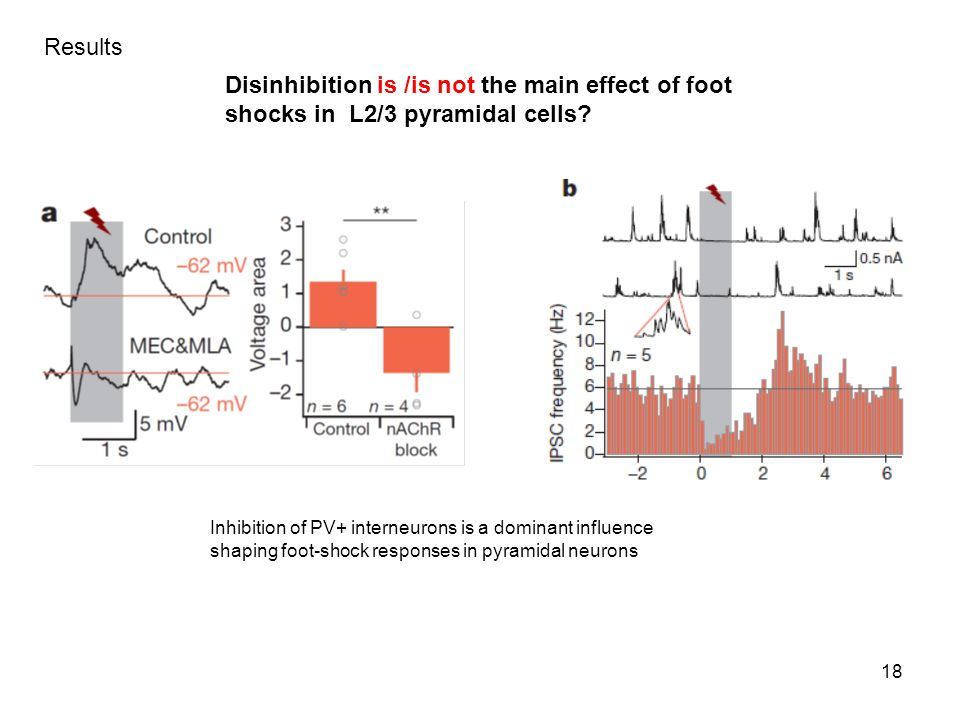18 Disinhibition is /is not the main effect of foot shocks in L2/3 pyramidal cells.