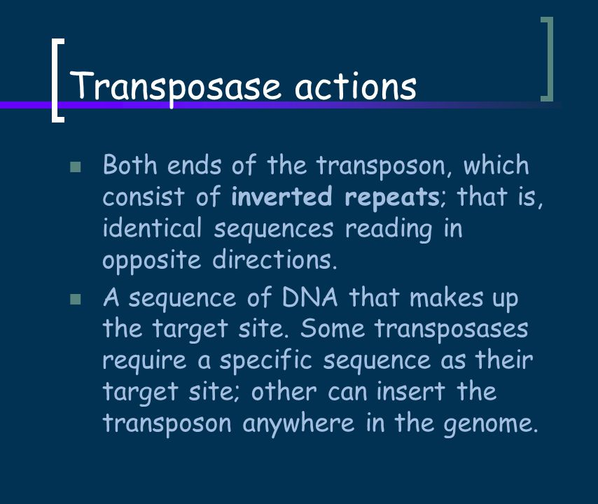 Transposase actions Both ends of the transposon, which consist of inverted repeats; that is, identical sequences reading in opposite directions.