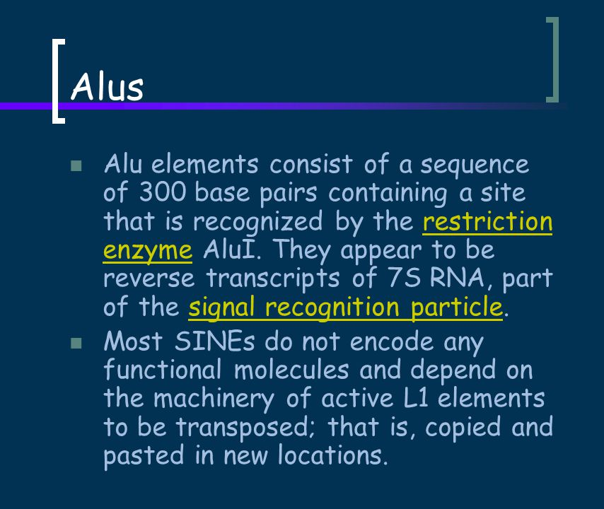 Alus Alu elements consist of a sequence of 300 base pairs containing a site that is recognized by the restriction enzyme AluI.