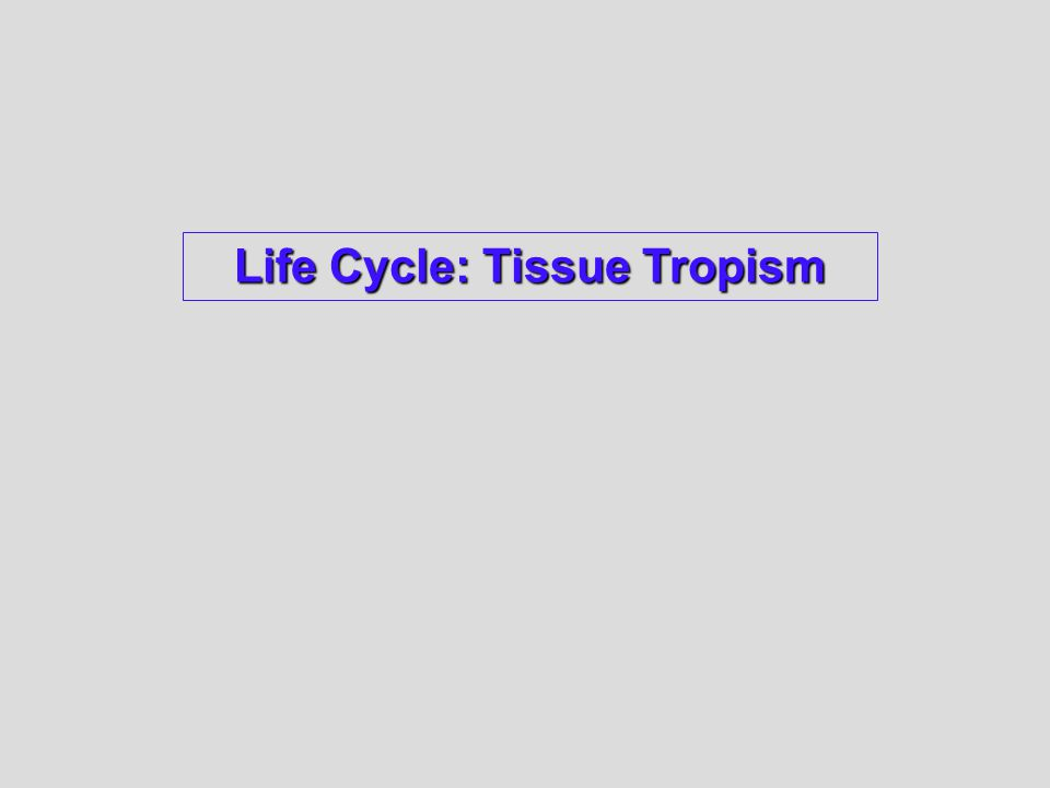 Life Cycle: Tissue Tropism