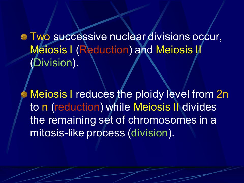 Meiosis Diploid cells undergo meiosis to form haploid cells Meiosis potentially produces four haploid cells Meiosis involves two separate divisions