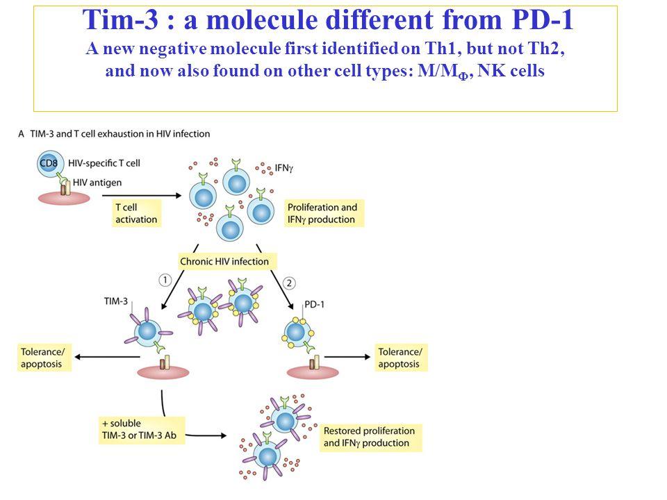 IgG α-Tim-3 Lm-control Lm-NS5B IgG α-Tim-3 CD3 + CD8 + HCV-Tetramer B) %HCV-Tet + /CD3 + CD8 + CD3 + CD8 + HCV-Tetramer IsoHCV-resolvedHCV-infected Tim-3 SSC %Tim-3 + /HCV-Tet + CD3 + CD8 + A) Gating strategy Why do we care.
