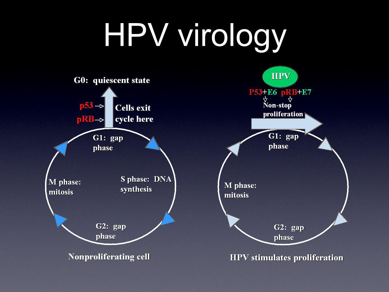 HPV virology