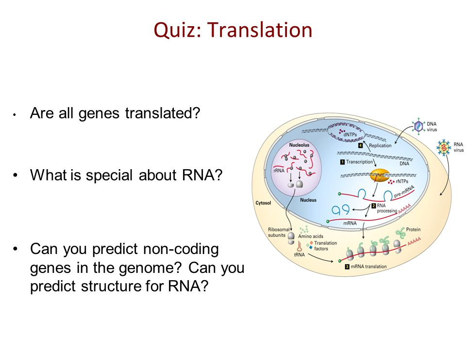 Quiz: Translation How is Protein Sequencing done.