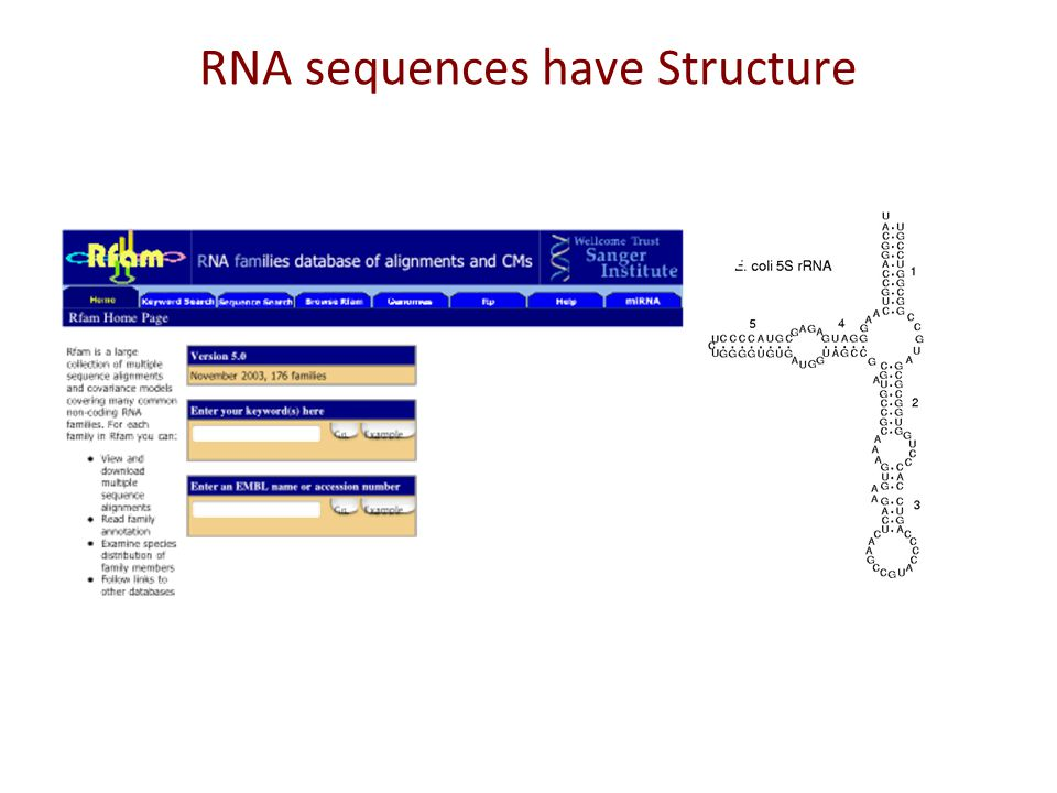 Quiz: Translation Are all genes translated. Can you predict non-coding genes in the genome.