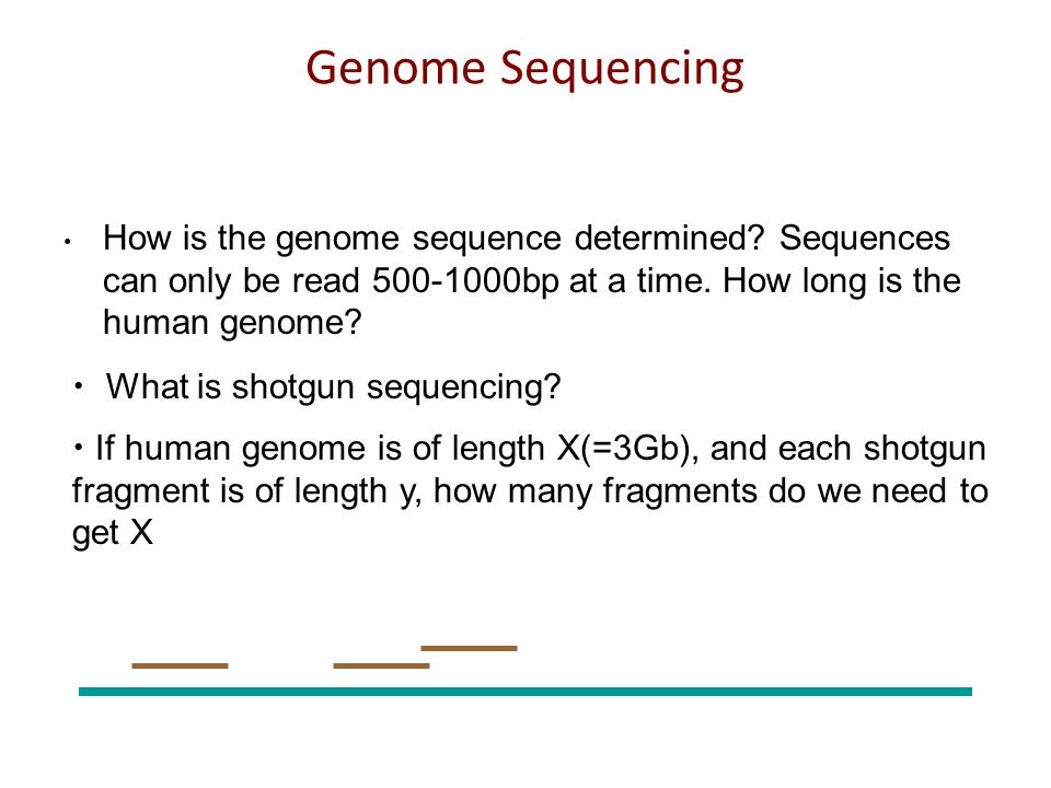 Packaging All of the transcripts are encoded in DNA, which is packaged into the genome.