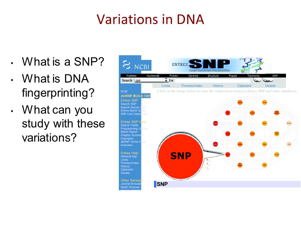 Quiz:Population genetics We are all similar, yet we are different.