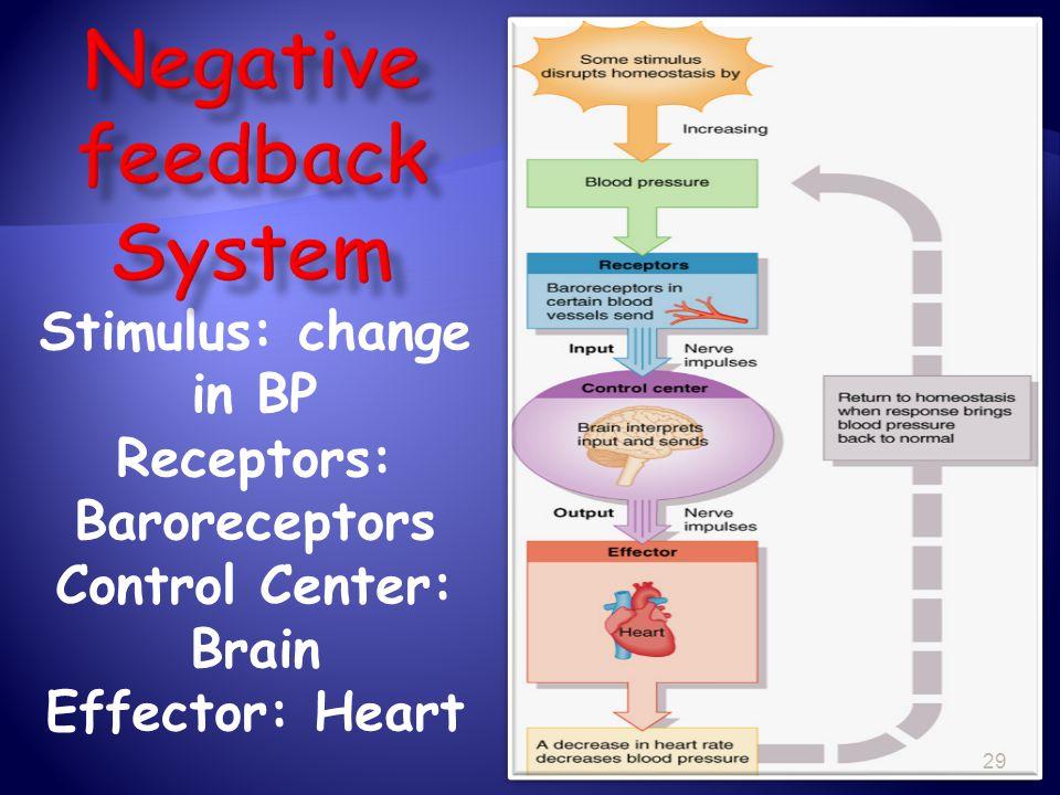 Stimulus: change in BP Receptors: Baroreceptors Control Center: Brain Effector: Heart 29