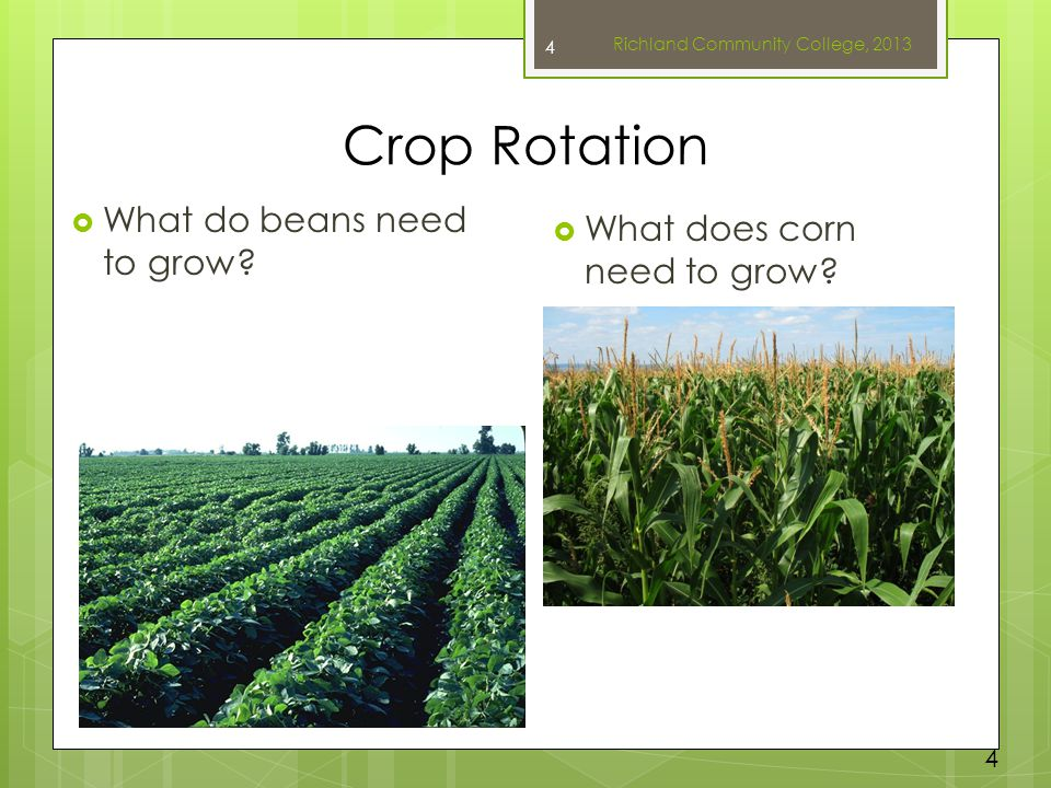 Crop Rotation  What do beans need to grow?  What does corn need to grow? Richland Community College, 2013 4 4