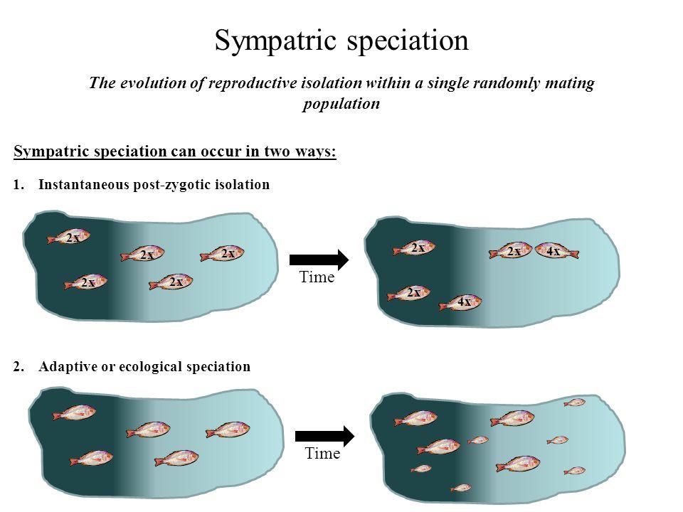 The process of instantaneous sympatric speciation: polyploidy 2x Meiosis Parental diploids (2x) Diploid pollen (2x) Diploid ovule (2x) 4x Tetraploid offspring (4x)