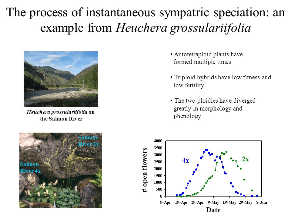 The process of adaptive sympatric speciation: Step 1 Begin with a species composed of a single panmictic population.