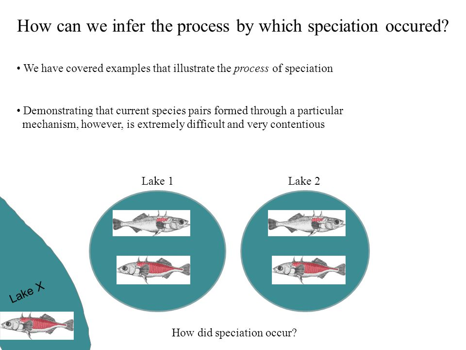 How can we infer the process by which speciation occured? We have covered examples that illustrate the process of speciation Demonstrating that curren