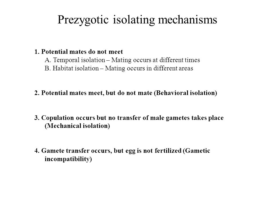Prezygotic isolating mechanisms: an example Green Lacewing Three morphologically indistinguishable species Males attempt to initiate a duet of low frequency songs produced by abdominal vibrations Mating does not occur unless the female responds Females respond much more frequently to songs of their own species