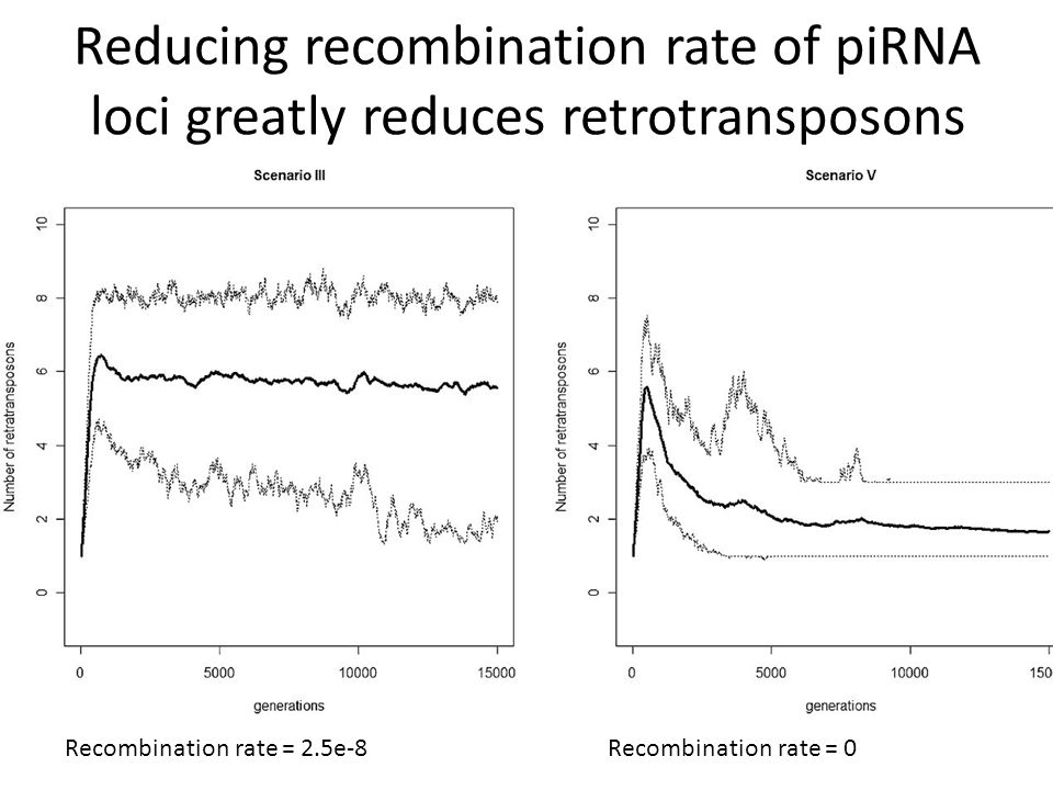 Reducing recombination rate of piRNA loci greatly reduces retrotransposons Recombination rate = 2.5e-8Recombination rate = 0