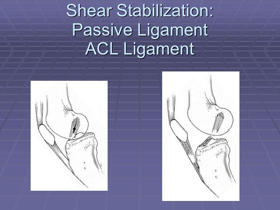 Shear Stabilization: Passive Ligament ACL Ligament