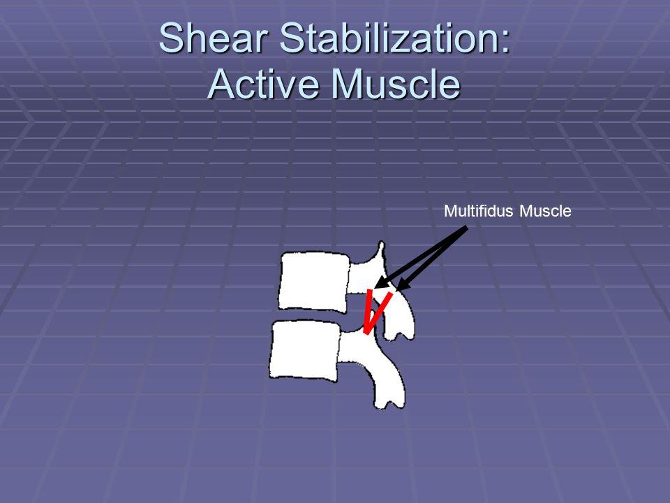 Shear Stabilization: Active Muscle Multifidus Muscle