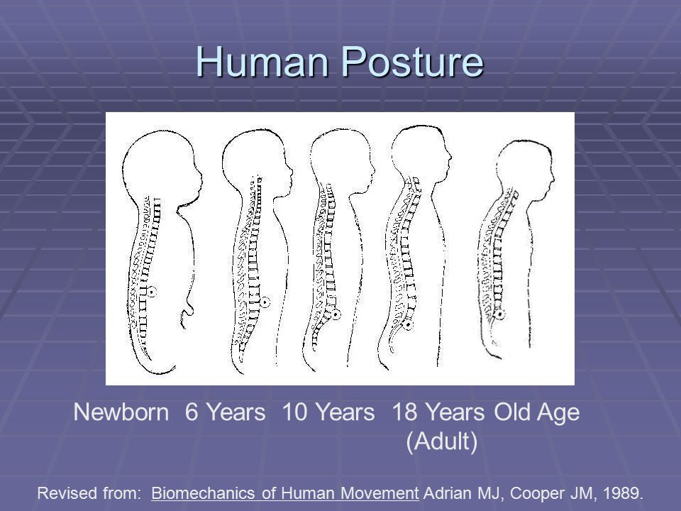 Newborn 6 Years 10 Years 18 Years Old Age (Adult)‏ Human Posture Revised from: Biomechanics of Human Movement Adrian MJ, Cooper JM, 1989.