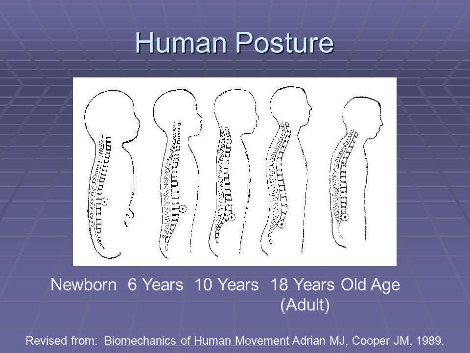 Newborn 6 Years 10 Years 18 Years Old Age (Adult) Human Posture Revised from: Biomechanics of Human Movement Adrian MJ, Cooper JM, 1989.