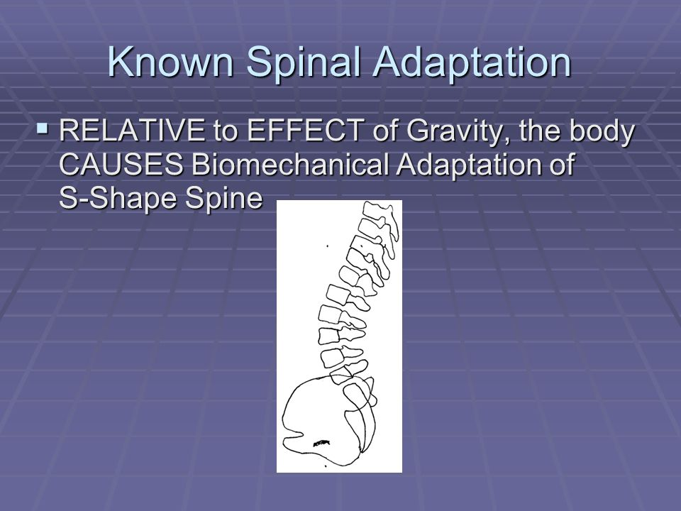 Known Spinal Adaptation  RELATIVE to EFFECT of Gravity, the body CAUSES Biomechanical Adaptation of S-Shape Spine