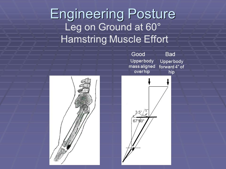 Engineering Posture Leg on Ground at 60° Hamstring Muscle Effort Upper body mass aligned over hip Upper body forward 4 of hip 1 3.5 67°60° GoodBad