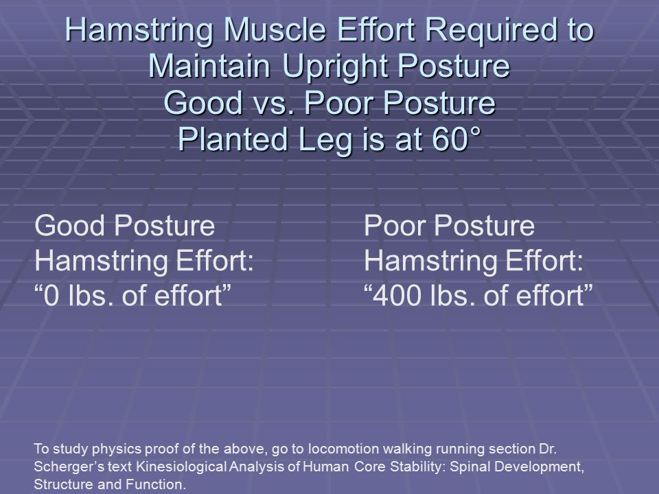 Hamstring Muscle Effort Required to Maintain Upright Posture Good vs.