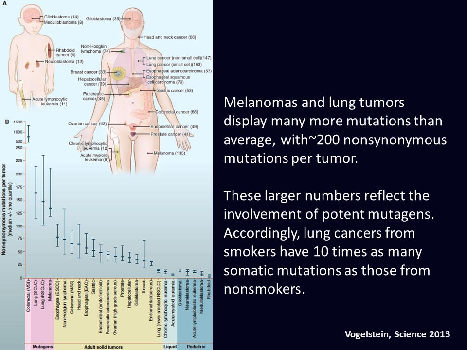Vogelstein, Science 2013 Melanomas and lung tumors display many more mutations than average, with~200 nonsynonymous mutations per tumor. These larger