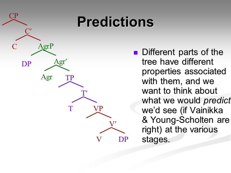 Predictions Different parts of the tree have different properties associated with them, and we want to think about what we would predict we'd see (if