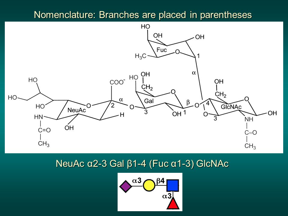 NeuAc α2-3 Gal β1-4 (Fuc α1-3) GlcNAc Nomenclature: Branches are placed in parentheses