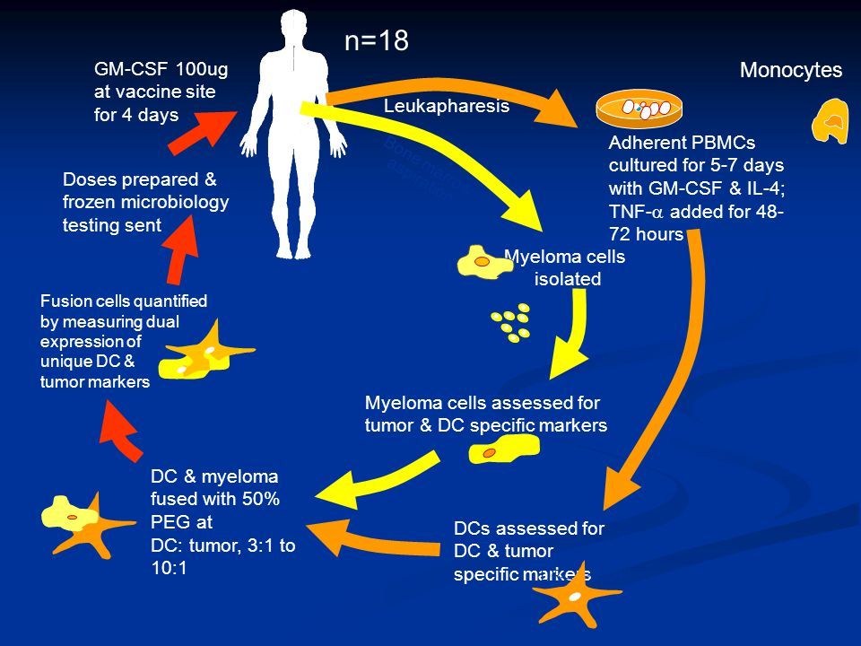 Adherent PBMCs cultured for 5-7 days with GM-CSF & IL-4; TNF-  added for 48- 72 hours Myeloma cells isolated DCs assessed for DC & tumor specific markers Myeloma cells assessed for tumor & DC specific markers DC & myeloma fused with 50% PEG at DC: tumor, 3:1 to 10:1 Fusion cells quantified by measuring dual expression of unique DC & tumor markers Doses prepared & frozen microbiology testing sent Leukapharesis Bone marrow aspiration CD38 MUC1 DR CD86 CD38 CD40 CD83 CD80 CD138 GM-CSF 100ug at vaccine site for 4 days Monocytes n=18