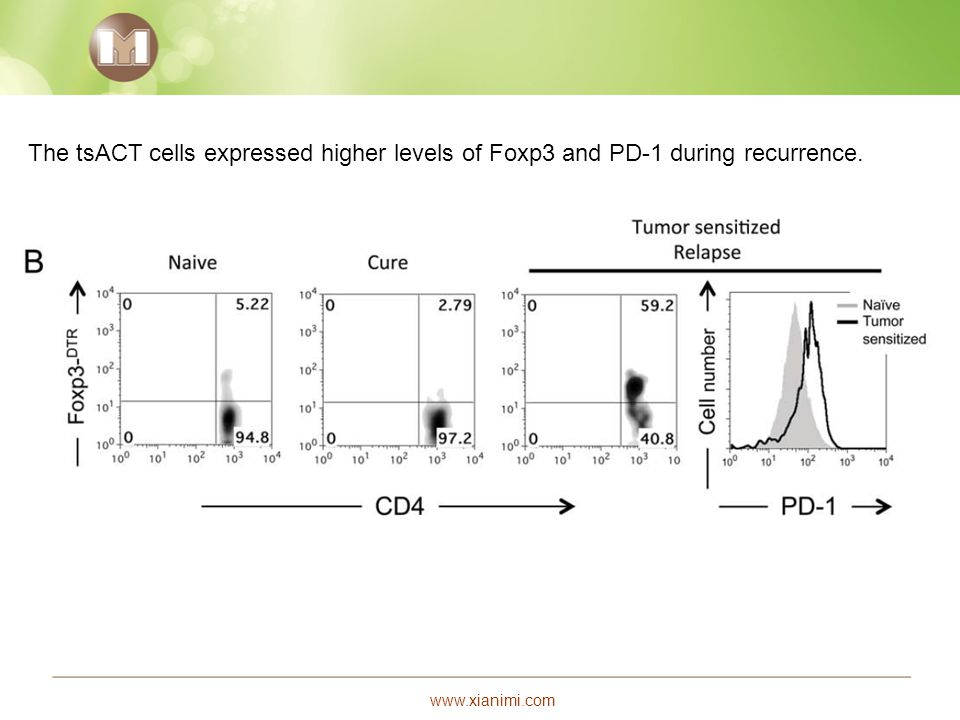 www.xianimi.com The tsACT cells expressed higher levels of Foxp3 and PD-1 during recurrence.
