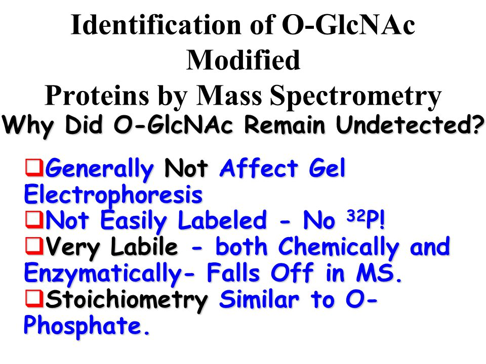 Identification of O-GlcNAc Modified Proteins by Mass Spectrometry  Generally Not Affect Gel Electrophoresis  Not Easily Labeled - No 32 P.