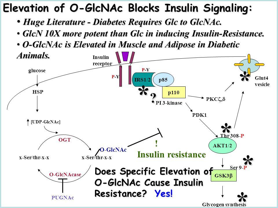 [UDP-GlcNAc] HSP OGT x-Ser/thr-x-x O-GlcNAc O-GlcNAcase glucose Glut4 vesicle PDK1 AKT1/2 Thr 308-P PKC  GSK3  P-Y IRS1/2 Insulin receptor P-Y p85 p110 PI 3-kinase Glycogen synthesis Ser 9-P PUGNAc .