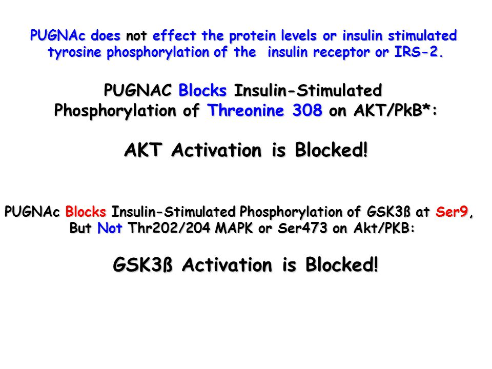 PUGNAc does not effect the protein levels or insulin stimulated tyrosine phosphorylation of the insulin receptor or IRS-2.
