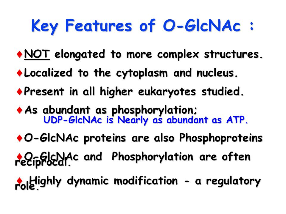 Key Features of O-GlcNAc :  NOT elongated to more complex structures.