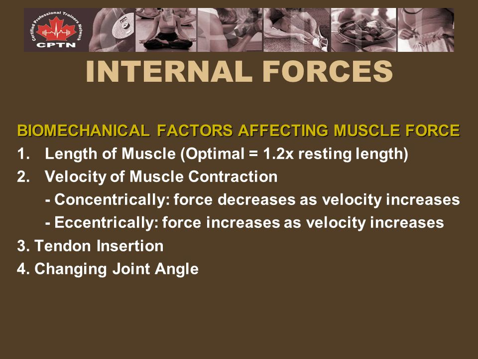 INTERNAL FORCES BIOMECHANICAL FACTORS AFFECTING MUSCLE FORCE 1.Length of Muscle (Optimal = 1.2x resting length) 2.Velocity of Muscle Contraction - Con