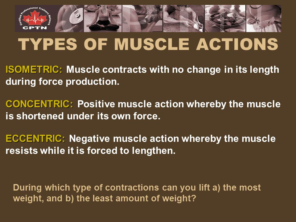 TYPES OF MUSCLE ACTIONS ISOMETRIC: ISOMETRIC: Muscle contracts with no change in its length during force production. CONCENTRIC: CONCENTRIC: Positive