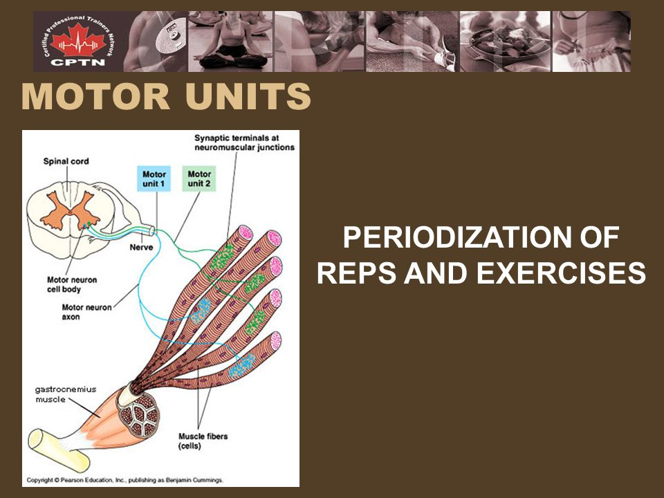 MOTOR UNITS PERIODIZATION OF REPS AND EXERCISES