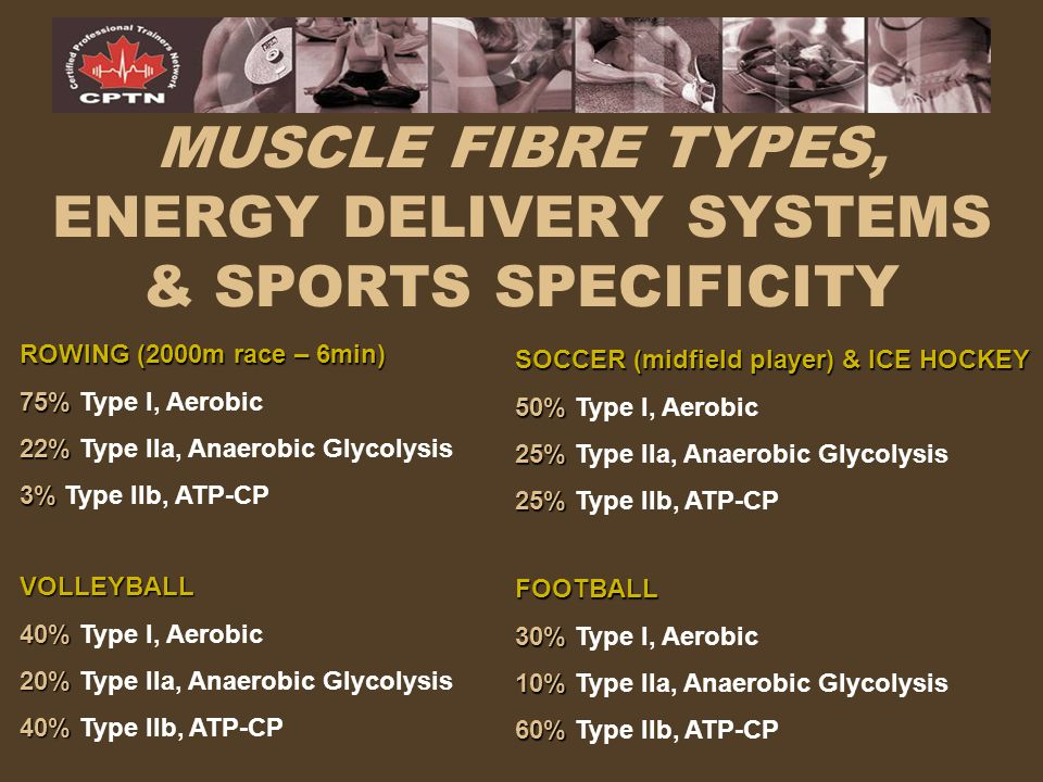 MUSCLE FIBRE TYPES, ENERGY DELIVERY SYSTEMS & SPORTS SPECIFICITY ROWING (2000m race – 6min) 75% 75% Type I, Aerobic 22% 22% Type IIa, Anaerobic Glycol