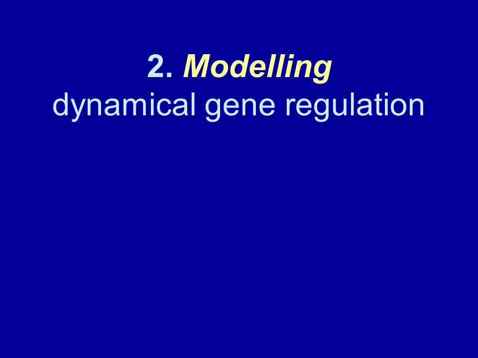 2. Modelling dynamical gene regulation