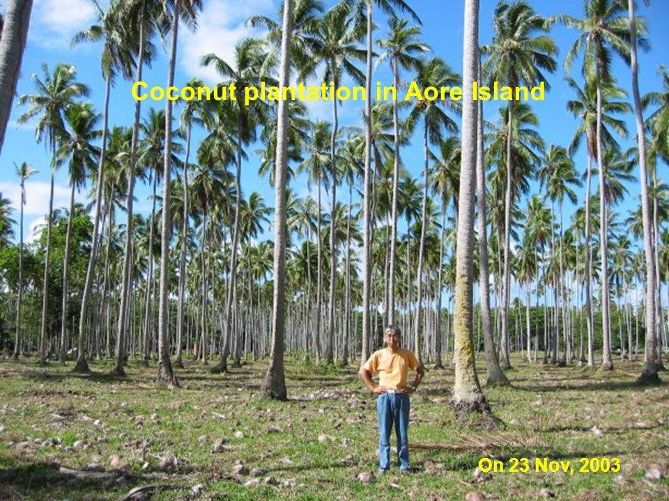 Coconut plantation in Aore Island On 23 Nov, 2003