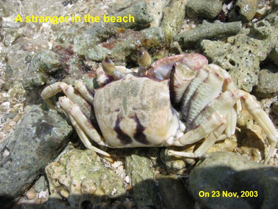 A stranger in the beach On 23 Nov, 2003