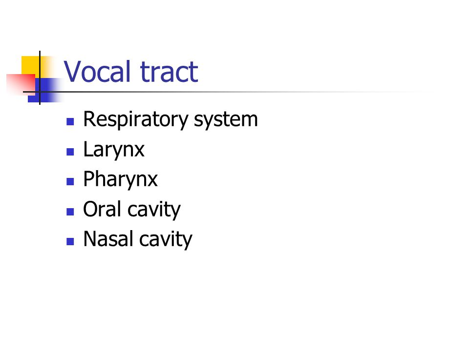 Vocal tract Respiratory system Larynx Pharynx Oral cavity Nasal cavity
