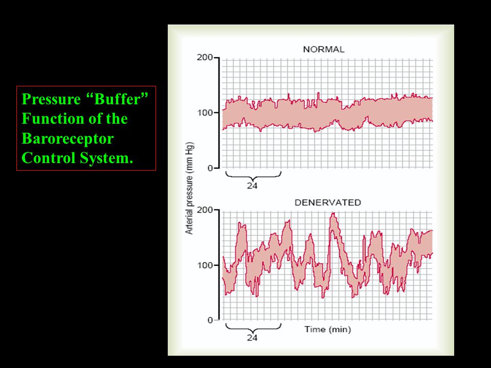 "Pressure "" Buffer "" Function of the Baroreceptor Control System."