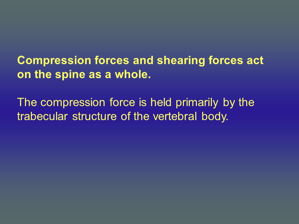 Compression forces and shearing forces act on the spine as a whole. The compression force is held primarily by the trabecular structure of the vertebr