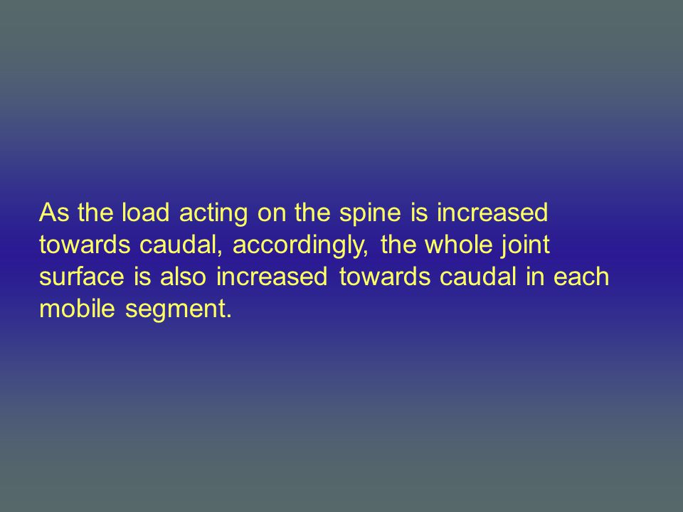 As the load acting on the spine is increased towards caudal, accordingly, the whole joint surface is also increased towards caudal in each mobile segment.